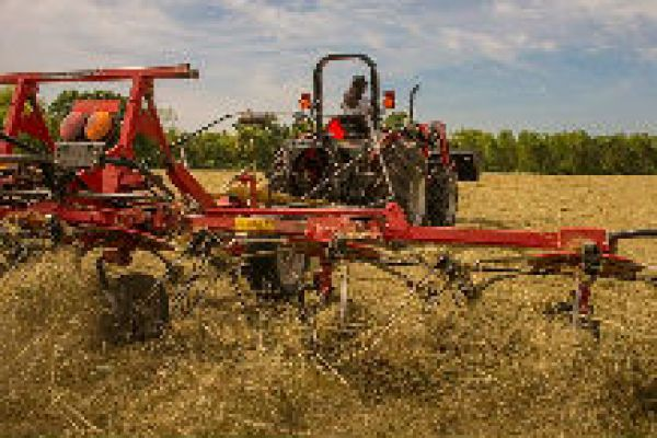 Massey Ferguson | Rakes & Tedders | TD Series Tedders for sale at Sorum Tractor Co., Inc.